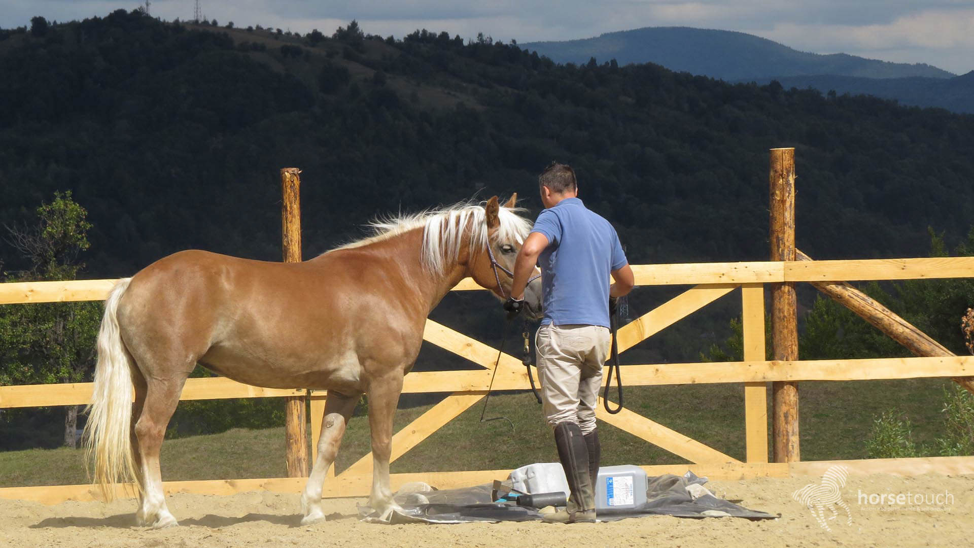 HorseTouch-Gallery-2-of-19-300x169