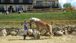 HorseTouch-Gallery-3-of-19-300x169