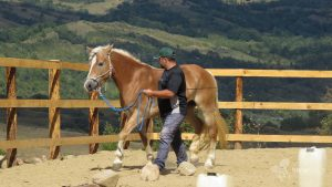 HorseTouch-Gallery-4-of-19-300x169