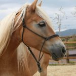The value of fear in horse assisted education