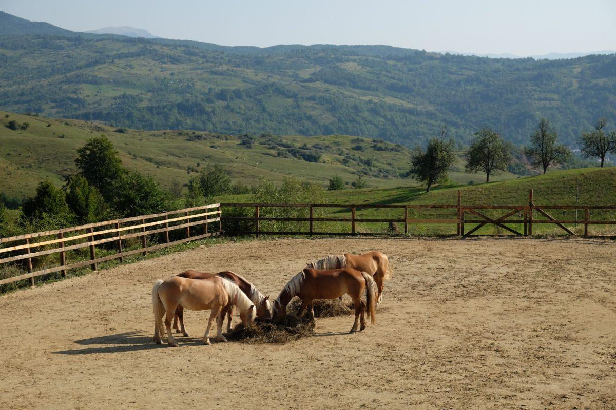 Observarea in educatia asistata de cai | Observation in HAE (1/2)