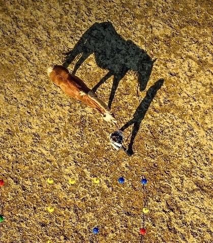 Atunci când vin (în ajutor) caii – Jurnal de învățare