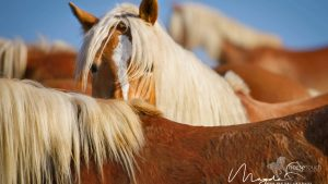 HorseTouch-Gallery-5-of-19-300x169